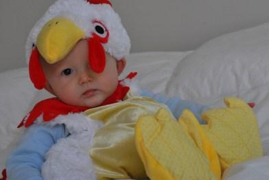 chicken noah