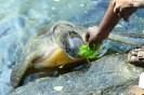 Turtle at Sanctuary