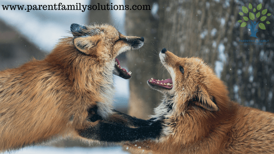 Needing to be Right - www.parentfamilysolutions.com