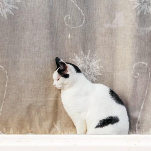 chat fenêtre - conseils voyage inoubliable
