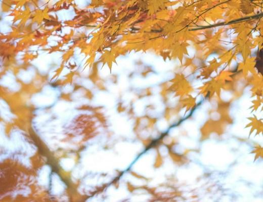 selection instagram automne