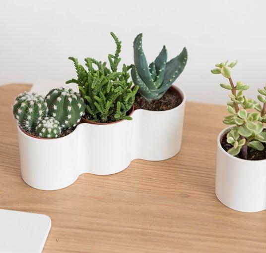 plantes vertes Bergamotte