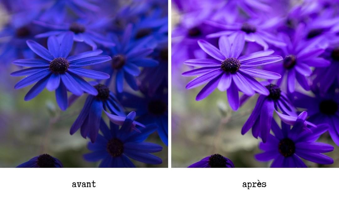 lavender lightroom preset