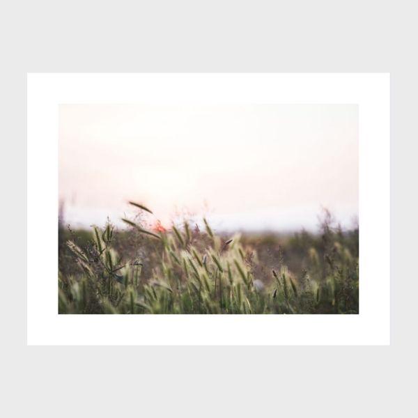 photo print île de ré nature