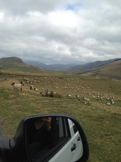 Paysage pastoral à Lecumberry
