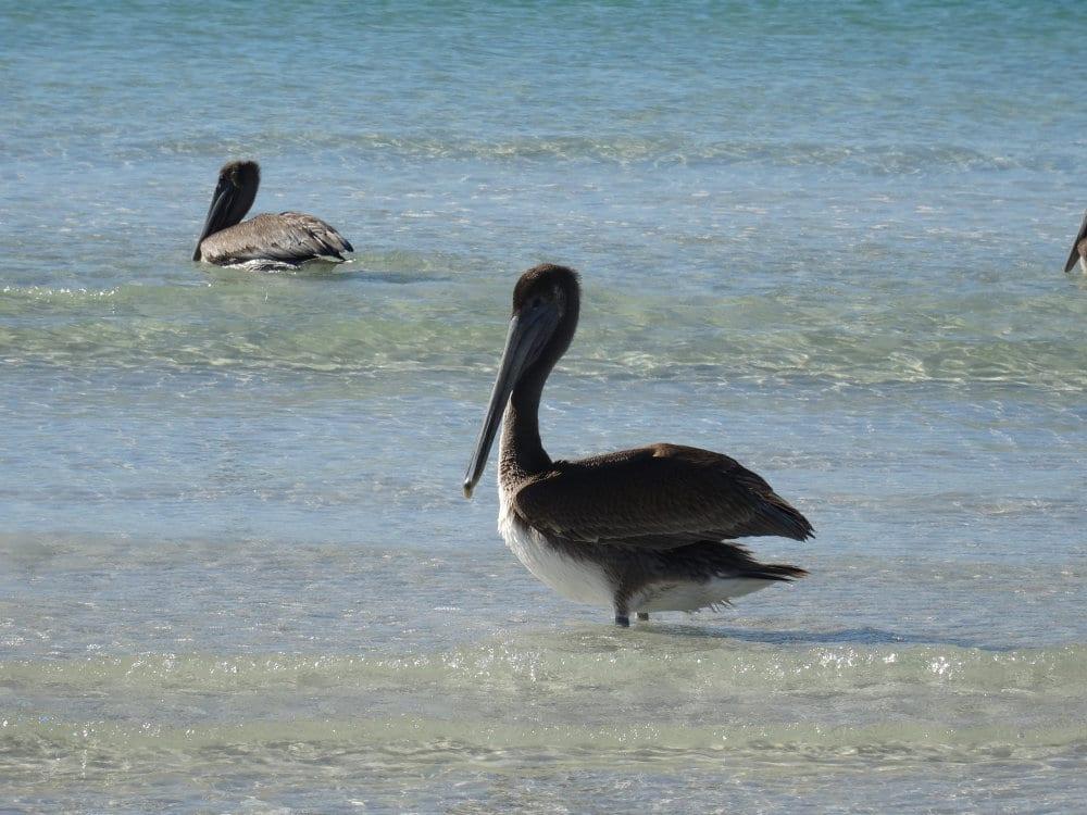 Sarasota siesta key Floride