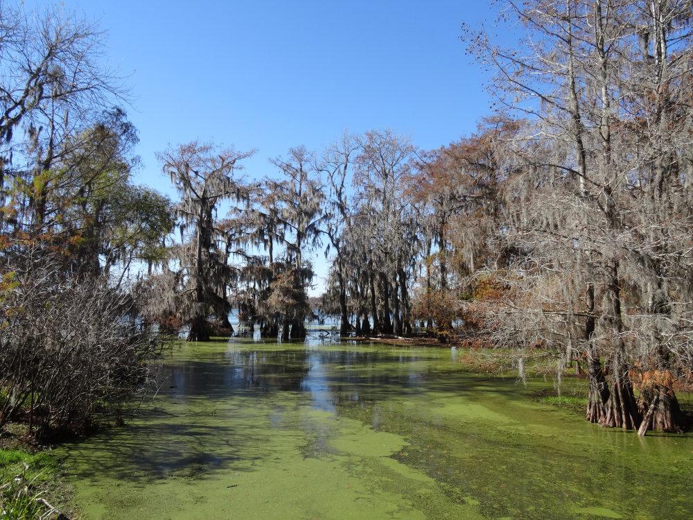 Un paysage typique des swamp de Louisiane