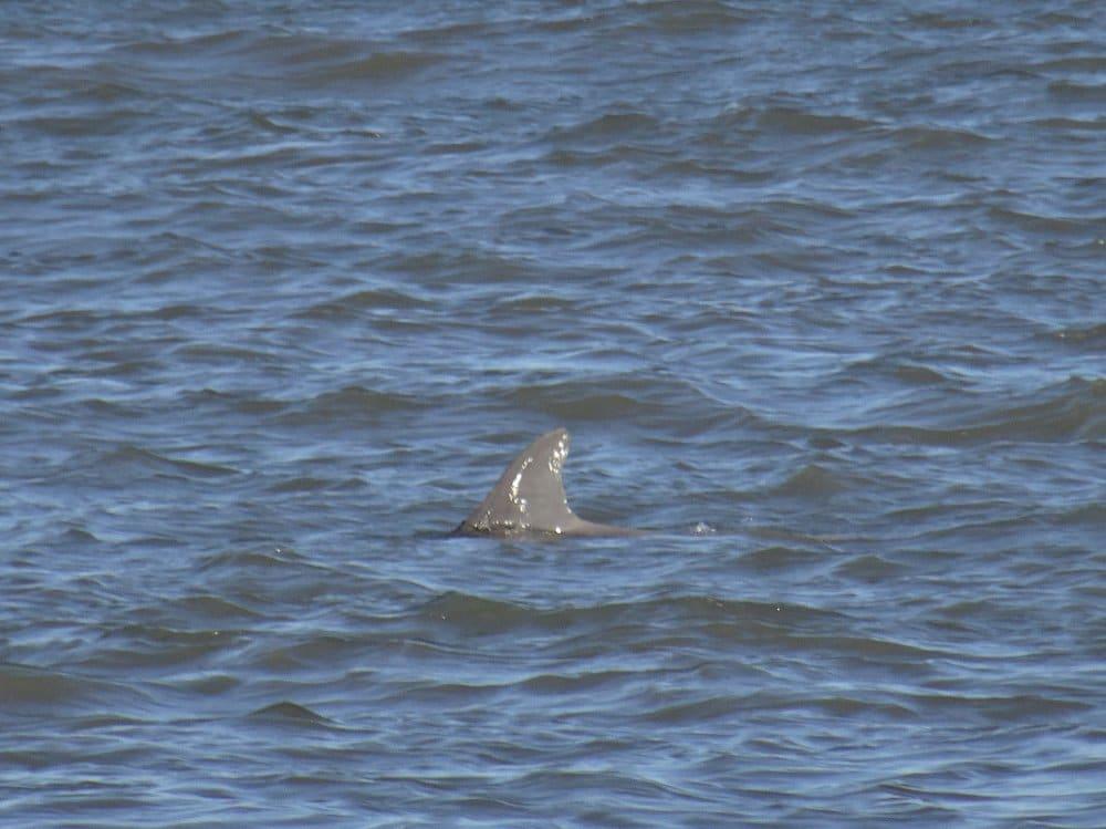 Un aileron de dauphin
