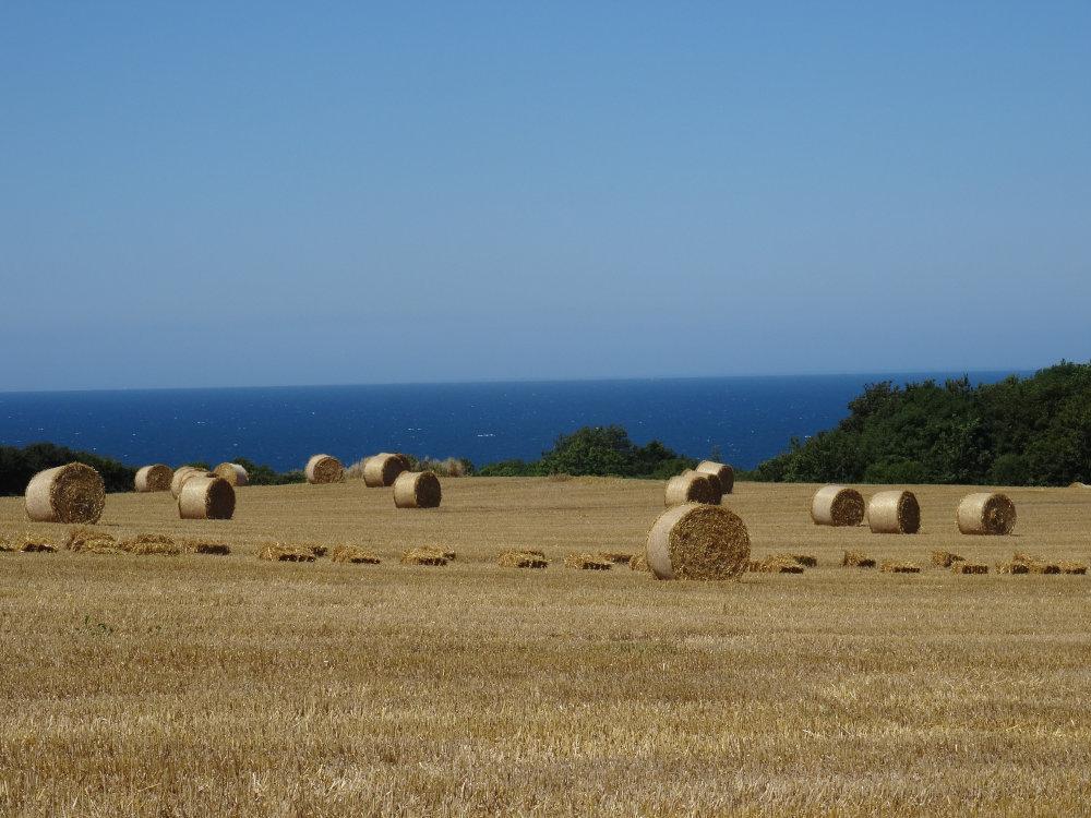 Entre champs et océan, près du parking de Fort La Latte