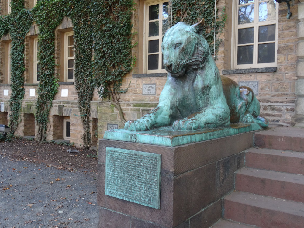 Le tigre de Princeton