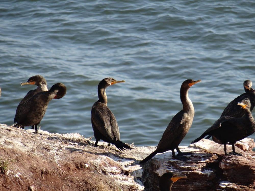 Balade à la pointe aux corbeaux