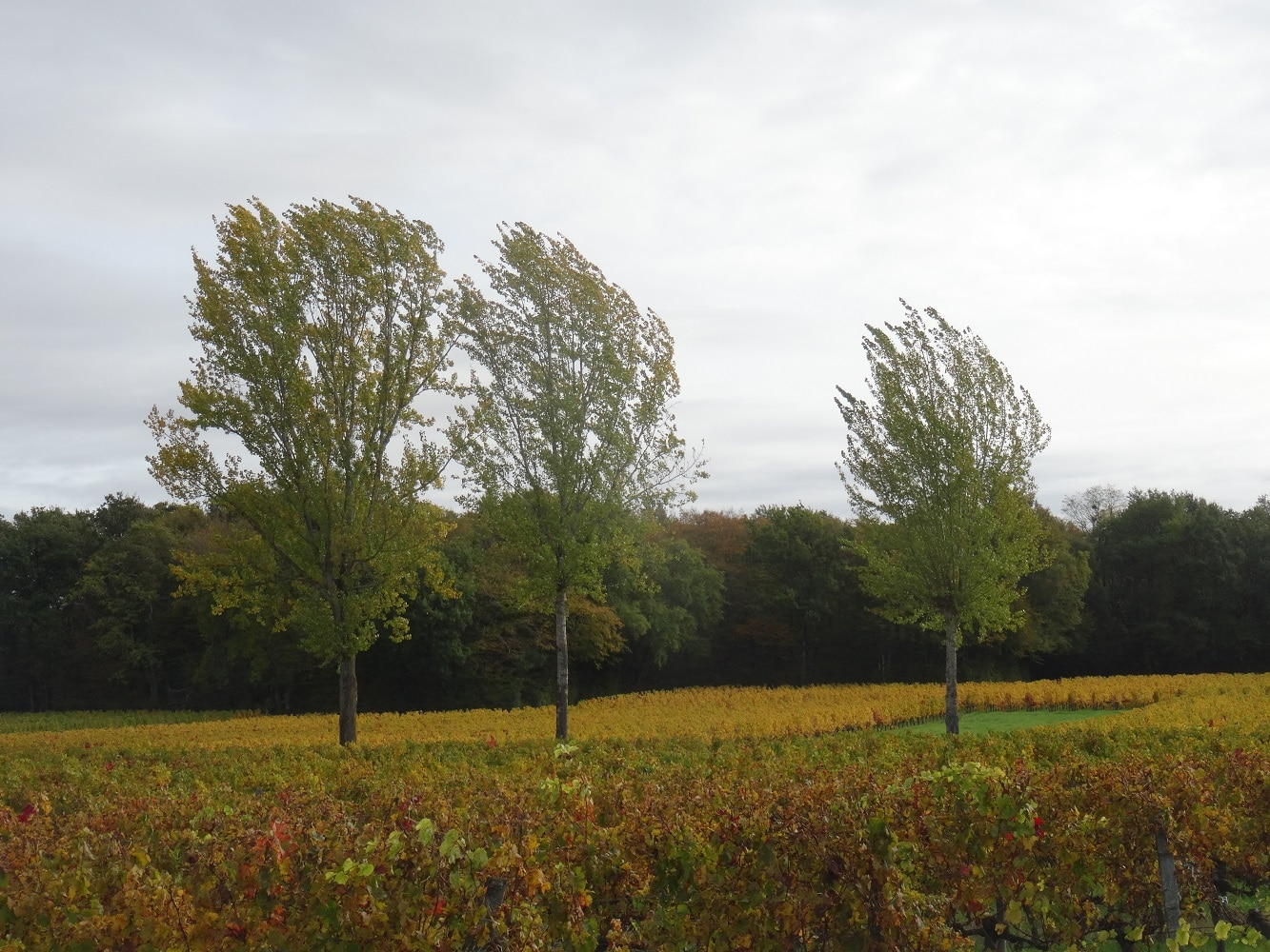 Nérigean en automne