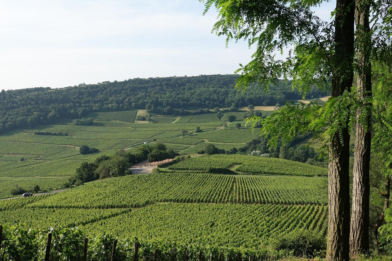 Vue sur les vignobles au pied de la roche de Solutré