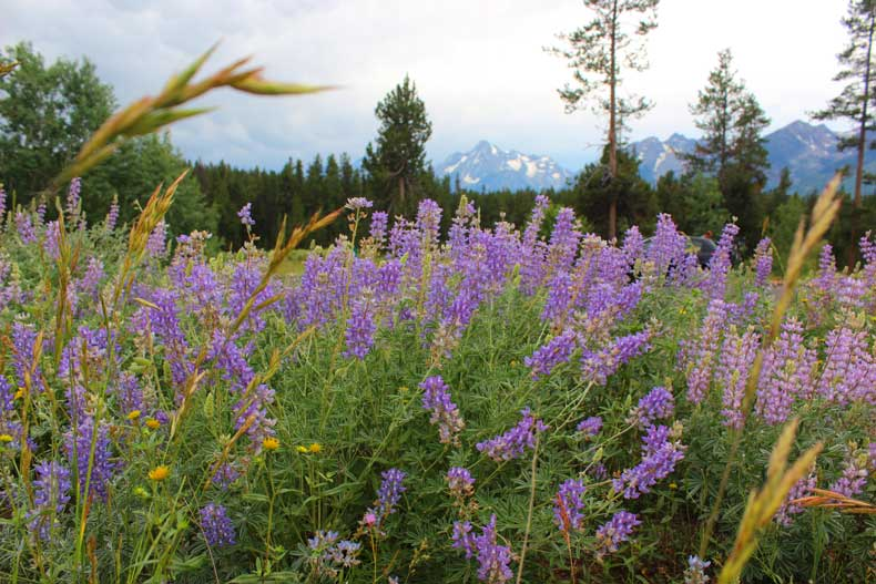 Summer Activities in Jackson Hole