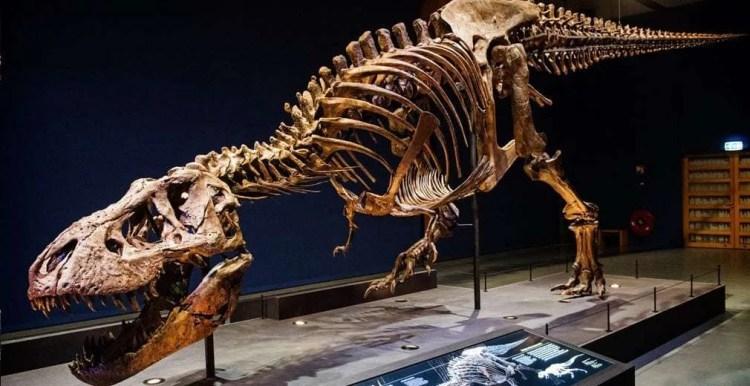 Samen Terug naar de Tijd van de Dinosaurussen