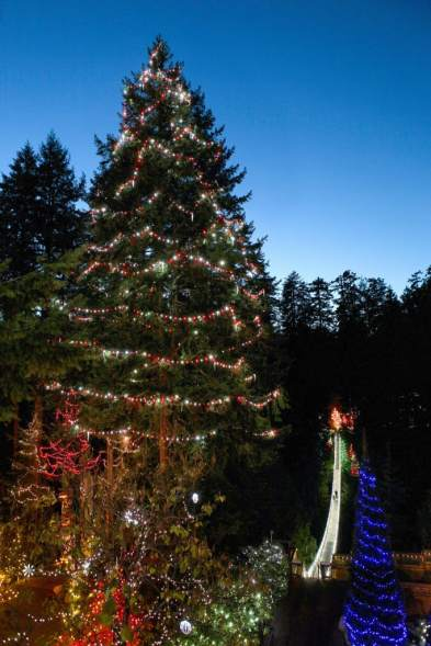 Canyon Lights World's Tallest Living Christmas Tree at CSBP med