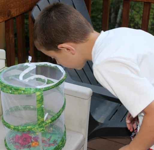 Butterfly-Garden | Parenting Healthy