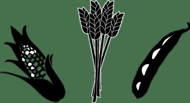 Corn Soya Blend Plus: A Nutritional Alternative During Pregnancy