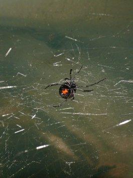 violence de l'araignée