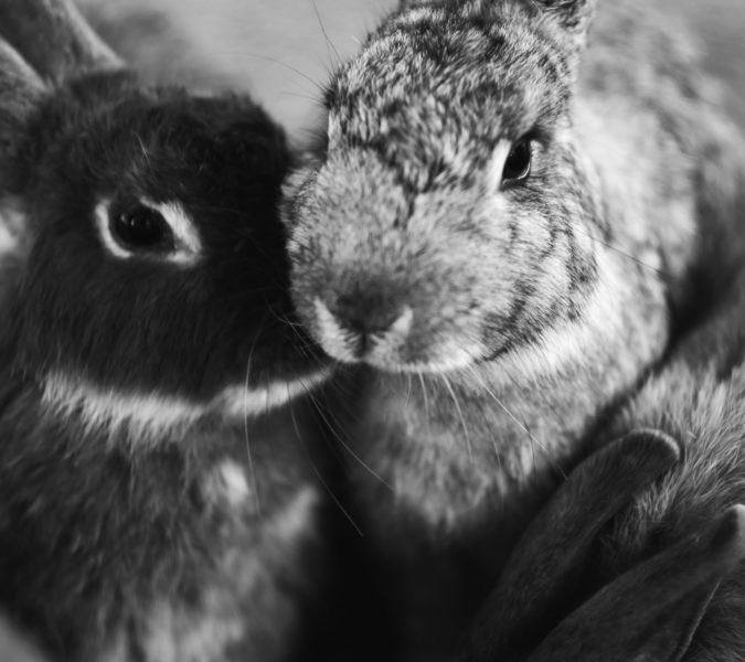 parfums non testés sur les animaux