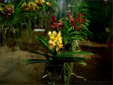 orchid_market_krabi_romana_granatova (34)