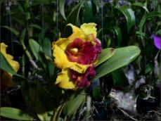 orchid_market_krabi_romana_granatova (38)