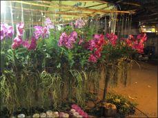 orchid_market_krabi_romana_granatova (49)