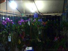 orchid_market_krabi_romana_granatova (9)