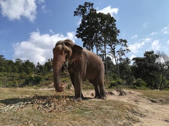blog-voyage-couple-parfums-de-liberte-leo-et-julie-petit-budget-elephant