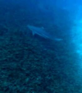 blog-voyage-couple-parfums-de-liberte-leo-et-julie-petit-budget-koh-tao-requin