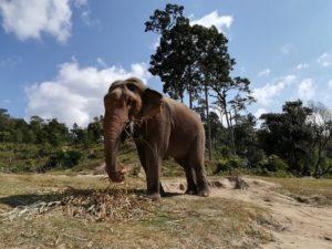 blog-voyage-couple-parfums-de-liberte-leo-et-julie-petit-budget-guide-complet-thailande-elephant
