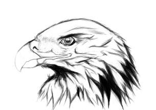golden-eagle_10