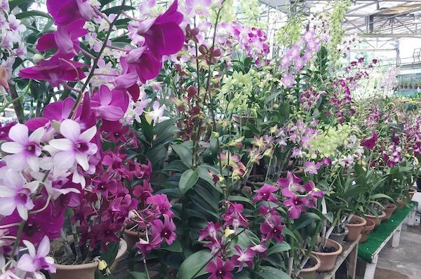 Fleurs a Singapour