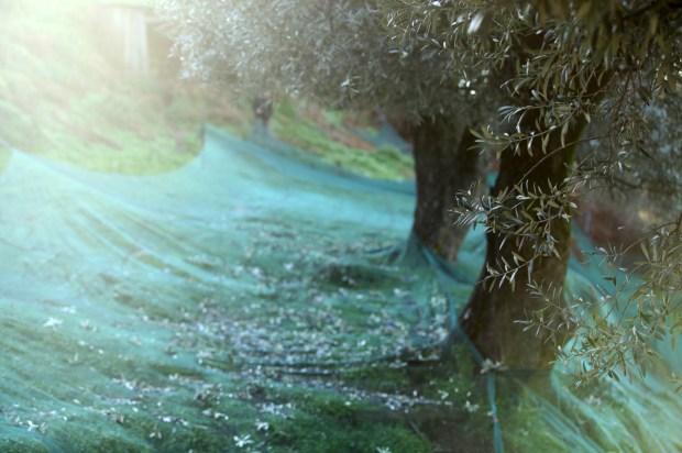 corsica terre de saveur