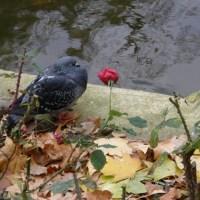 A bird lover's guide to Paris