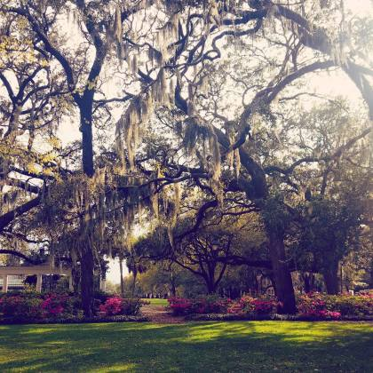 Heaven must be drenched in Spanish Moss!