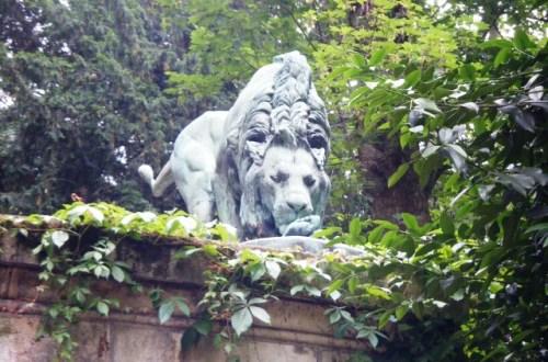 Lion-du-Jardin-des-plantes
