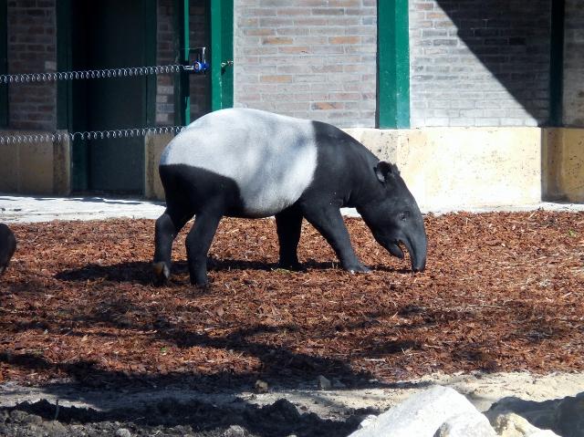 La Ménagerie Le Zoo du Jardin des Plantes (1)