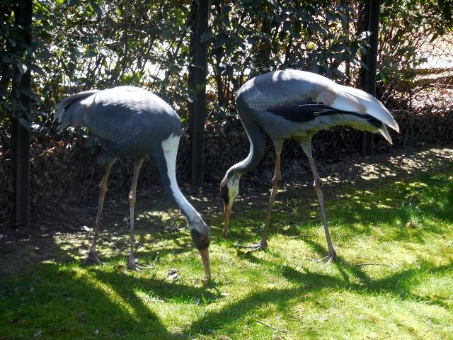 La Ménagerie Le Zoo du Jardin des Plantes (17)