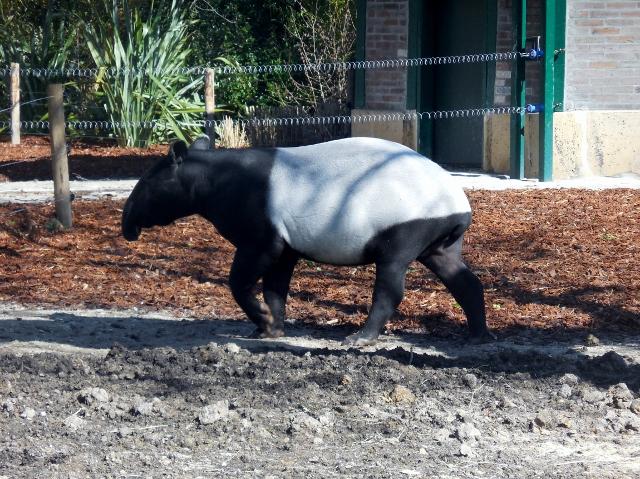 La Ménagerie Le Zoo du Jardin des Plantes (3)