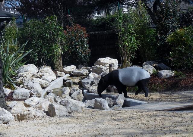 La Ménagerie Le Zoo du Jardin des Plantes (7)