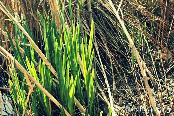 herbe-verte