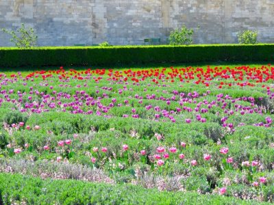 Spring in Paris at the Jardin des Tuileries