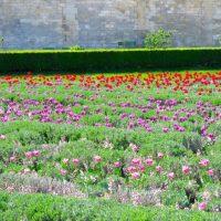Spring in Paris at the Jardin des Tuileries