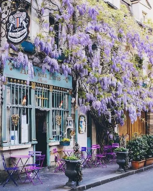 au vieux paris writing retreats wisteria purple cafe chairs