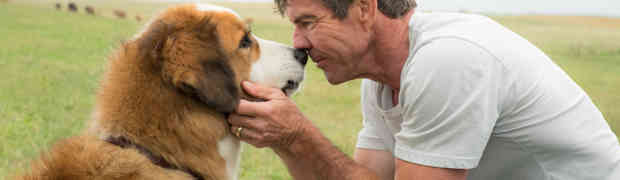 Gavin Polone on 'A Dog's Purpose' Outcry, What Really Happened and Who's to Blame