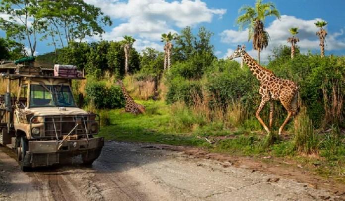 Kilimanjaro Safaris no Animal Kingdom.