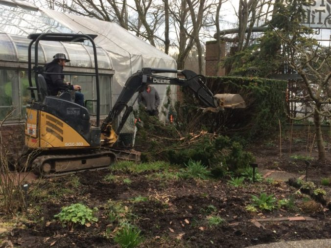 March 31 - Yew Hedge and chainlink fence by Greenhouse are removed.