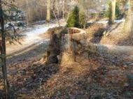 Verbliebener Baumstumpf