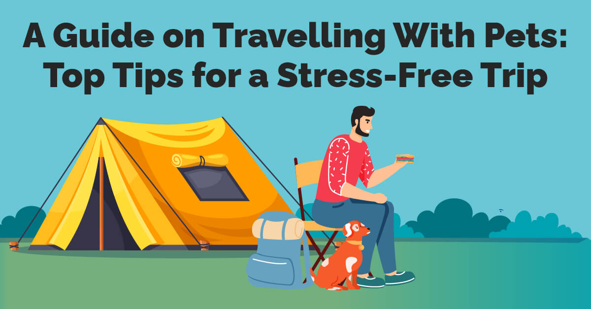 A Guide On Travelling With Pets Top Tips For A Stress-Free Trip